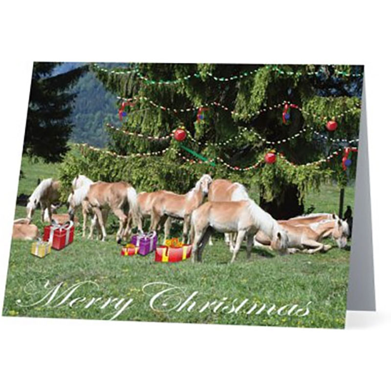 Haflinger Horse Online Merchandise