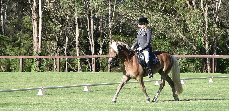 Haflinger Horse Events in Australia