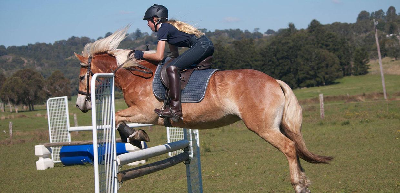 Haflinger Horse Show Jumping Events